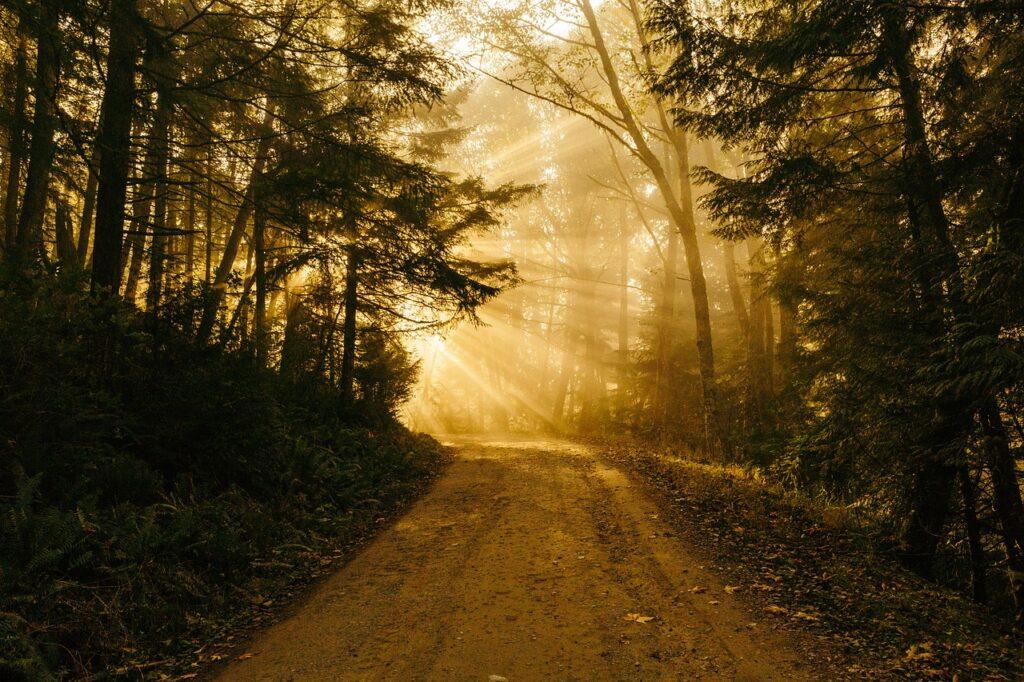 sunbeam, road, light